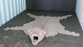Frauen erlegen den Bären durch Kontaktabbruch und Schweigen